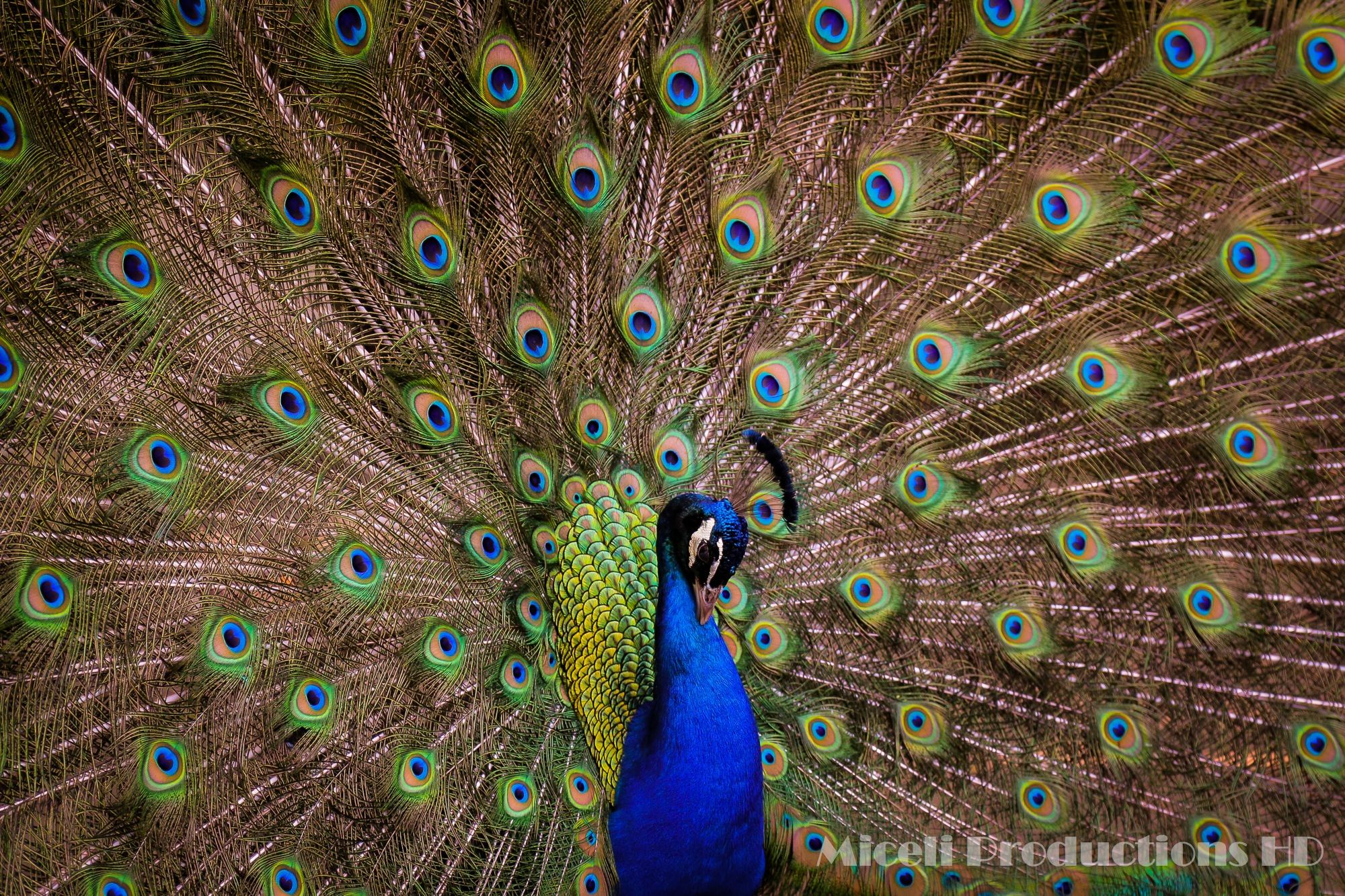 Bronx Zoo New York, Photography by Miceli Productions