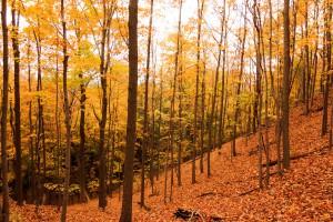 Fall in New England, Castle Craig, Meriden CT