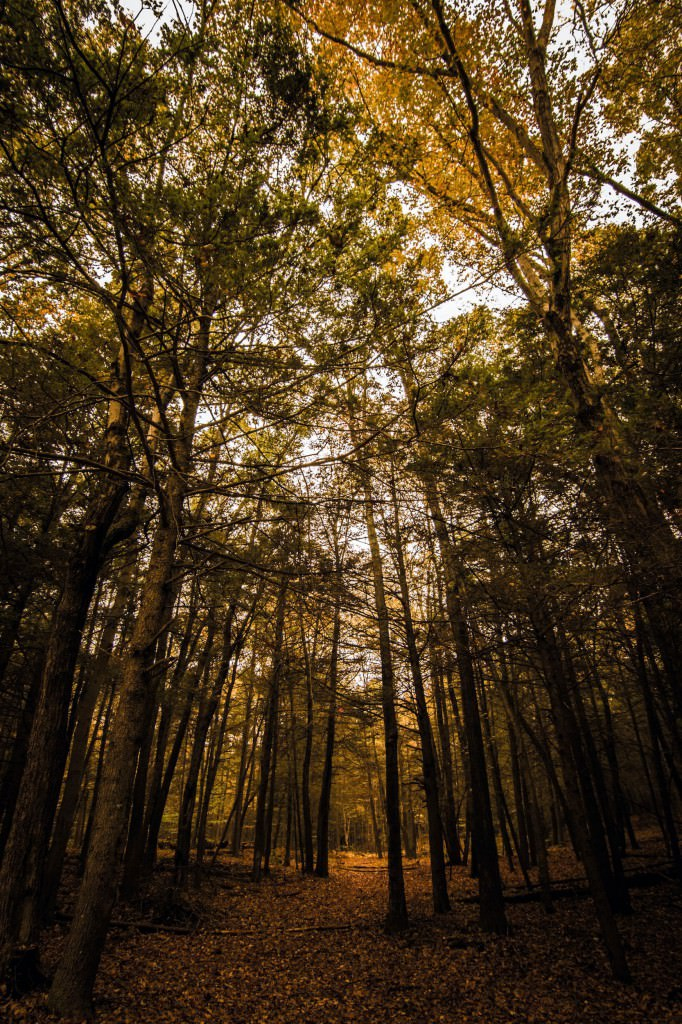 An image showing a path leading off Into the Woods in New England autumn fall foliage. Photo by Miceli Productions